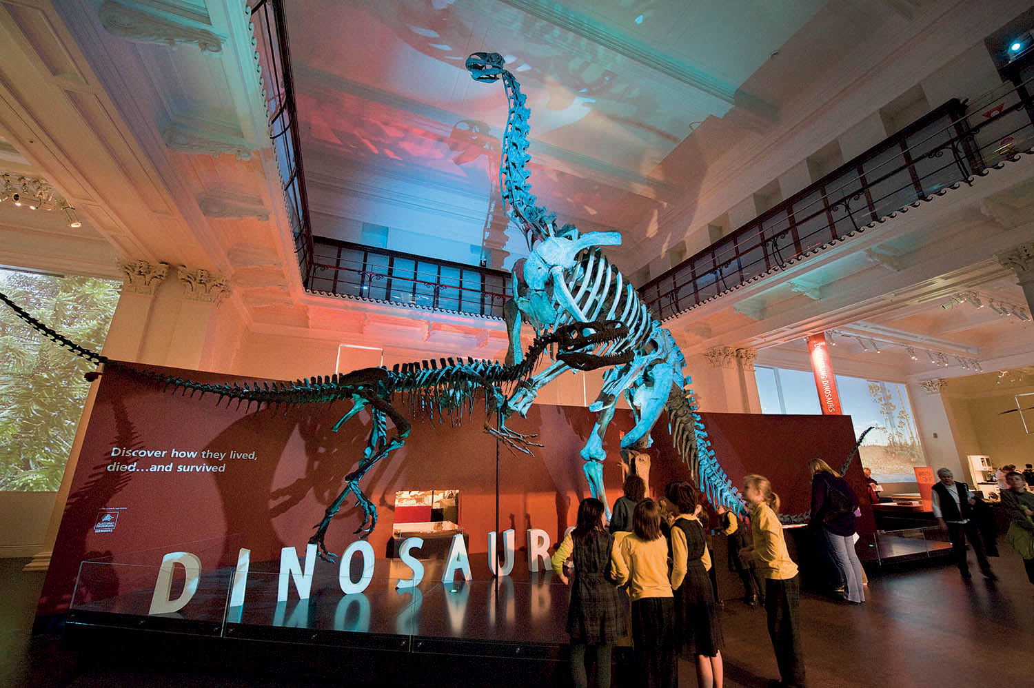 FRD's exhibition design heavily incorporates the heritage fabric of the Australian Museum building, enhancing the visual and interpretive impact of the museum's largest natural history artefacts: the casts of dinosaur skeletons.