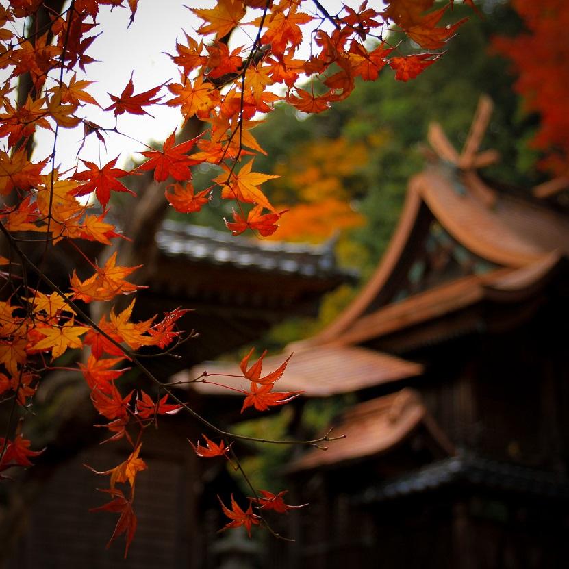 japan-fall-leaves