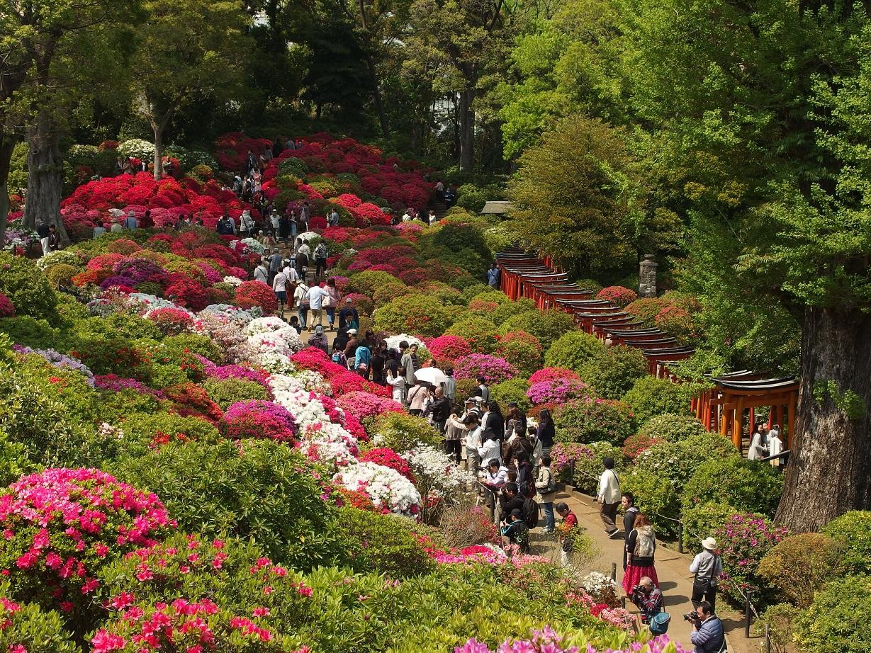nezu shrine tokyo azalea torii festival.jpg