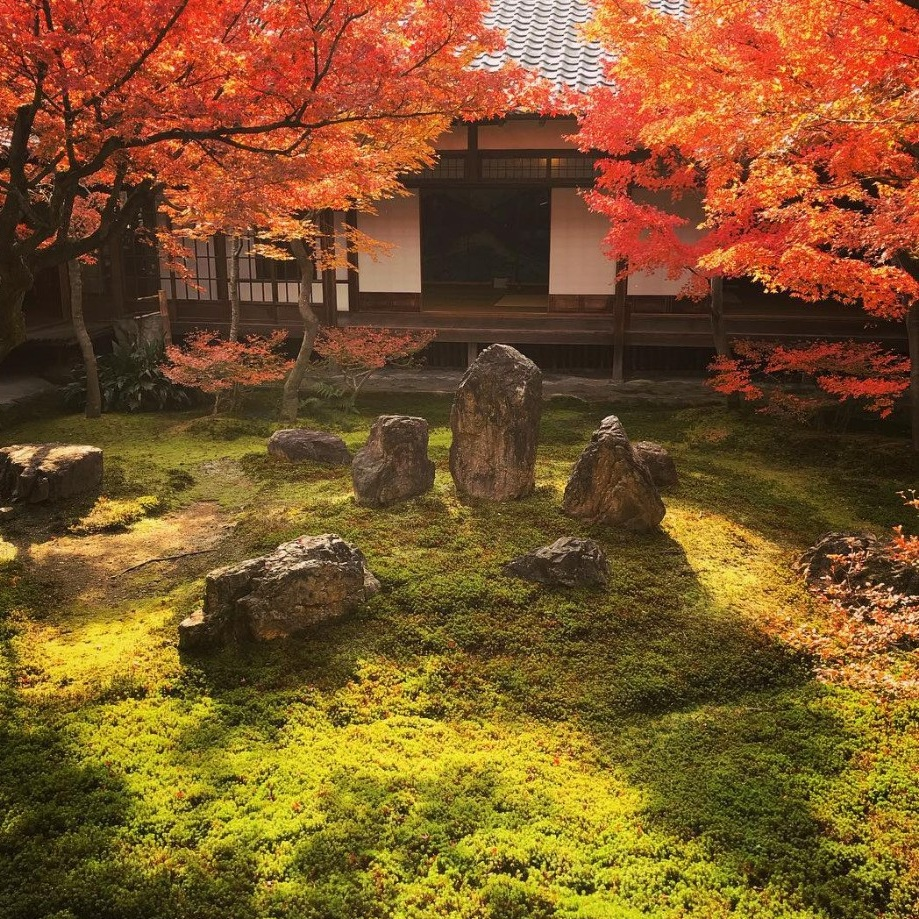 kyoto+autumn+moss+trees.jpg