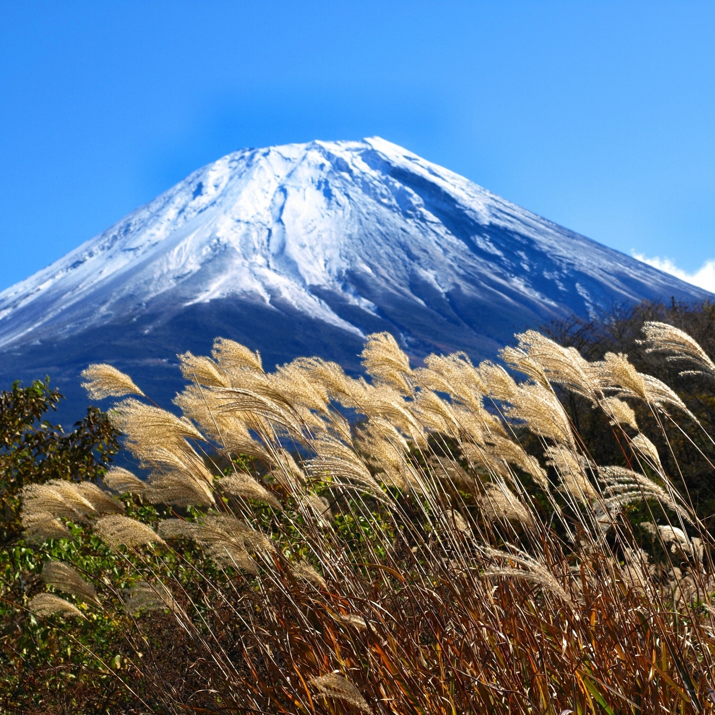 fuji+autumn+grass.jpg