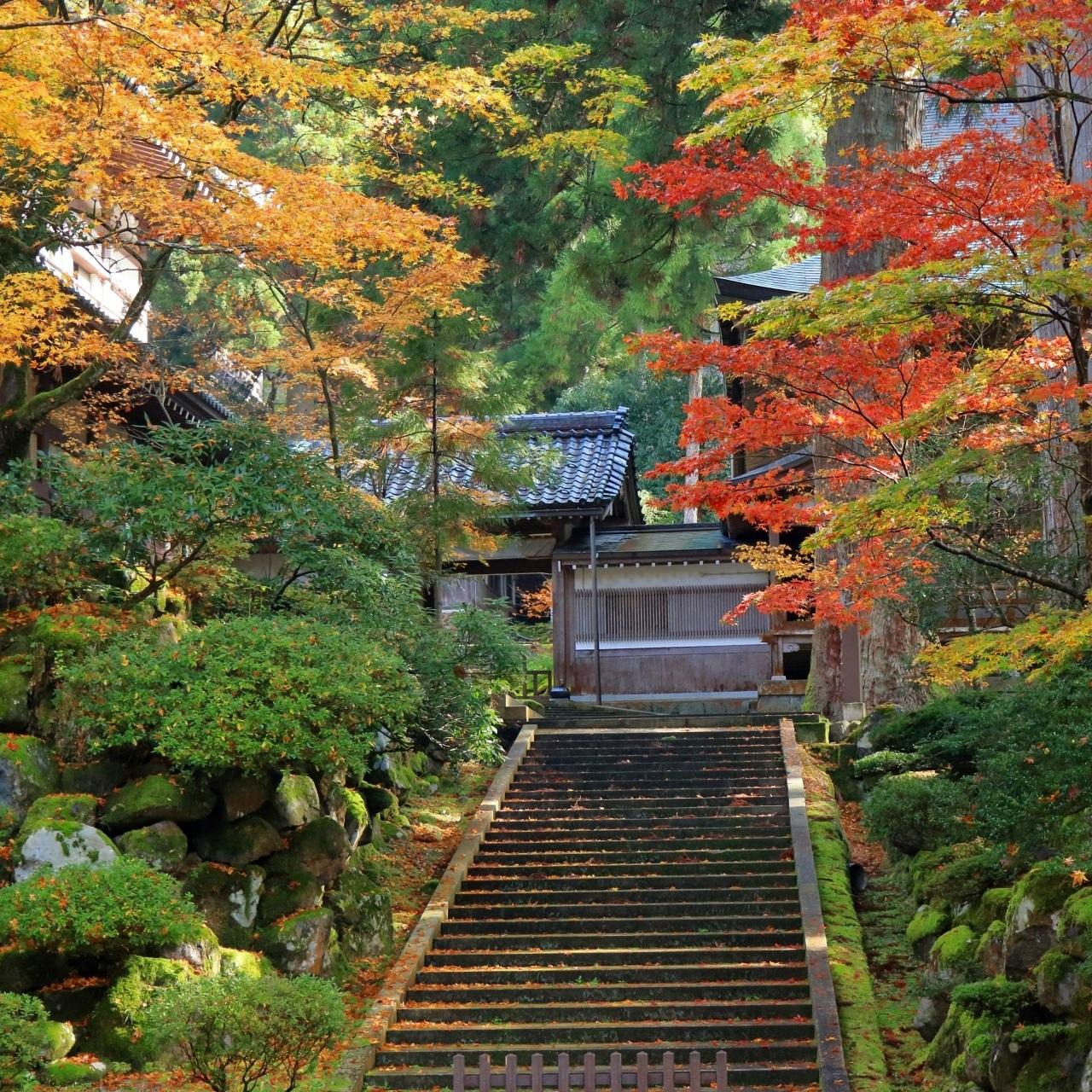 autumn%2Beiheiji%2Bfukui.jpg