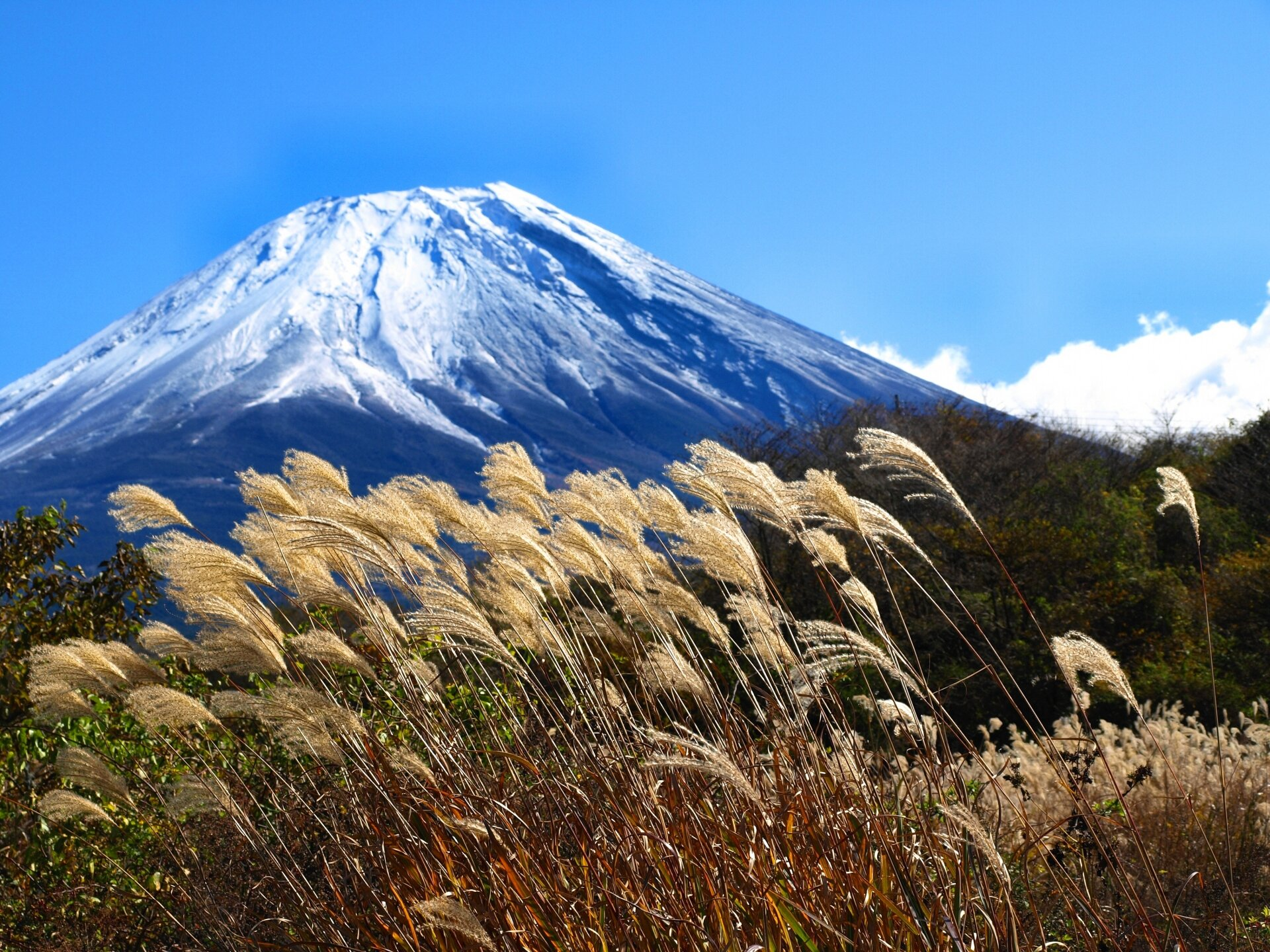 fuji autumn grass.jpg