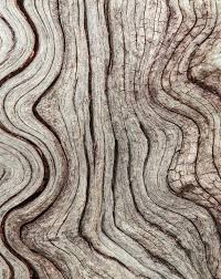 Textured, Curved Wood in Nature