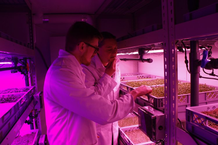 World-renowned plant scientist, Dr Antony Dodd, joins LettUs Grow - The world-renowned Dr Antony Dodd, whose internationally leading research focuses on circadian rhythms, plant physiology and environmental signalling, has been awarded a Royal Society Industry Fellowship to contribute to product development LettUs Grow.