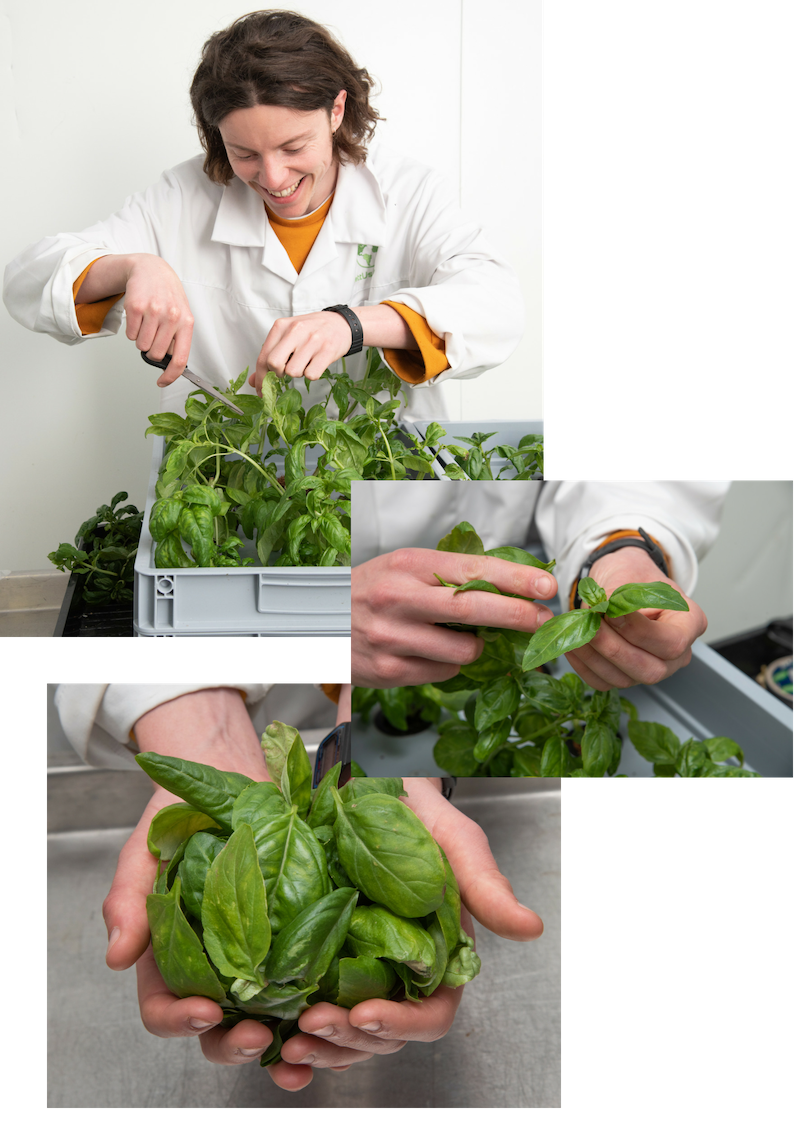 Experts in aeroponics - LettUs Grow was founded in 2015 to tackle some of the greatest challenges facing the world today: CO2 emissions, waste, ecosystem collapse and food security.Humanity must increase food production by 70% to feed nearly 10 billion people by 2050. We must achieve this with 25% less farmland, degraded soils and in an ever more unstable climate. Our existing methods of agriculture will not be enough to feed ourselves. Additionally, the majority of our 'fresh' produce is imported out of season, often travelling hundreds of miles to reach our plates. Lengthy supply chains result in a colossal environmental impact - every year 900,000 tonnes of food is wasted in supply chains in the UK alone, before even reaching our plates.A new generation of indoor agriculture companies is addressing this systemic problem by establishing localised indoor farms in and around cities, improving local food security and reducing food waste. However, many of these farms are having difficulty scaling to compete with traditional agriculture. That's where we come in…LettUs Grow is a diverse team of caring, environmentally-conscious plant scientists, developers, creatives, engineers and business whizzes. Sustainability is at our core. We are working towards B-Corp status and have embedded the triple-bottom-line into our founding documents. We believe that by empowering anyone to grow food sustainably and close to home, we can tackle some of these issues head-on.Our novel technology represents a step-change for indoor farms. We design modular, aeroponic irrigation and intelligent control technology to improve the efficiency, sustainability and ROI of indoor farming. Our systems are nozzle free, easy to clean, completely automatable and can be run without the need for pesticides. This patent-pending system dramatically reduces the operational cost of indoor agriculture, whilst delivering an average of a 70% increase in growth rate across a range of crop species compared to hyd