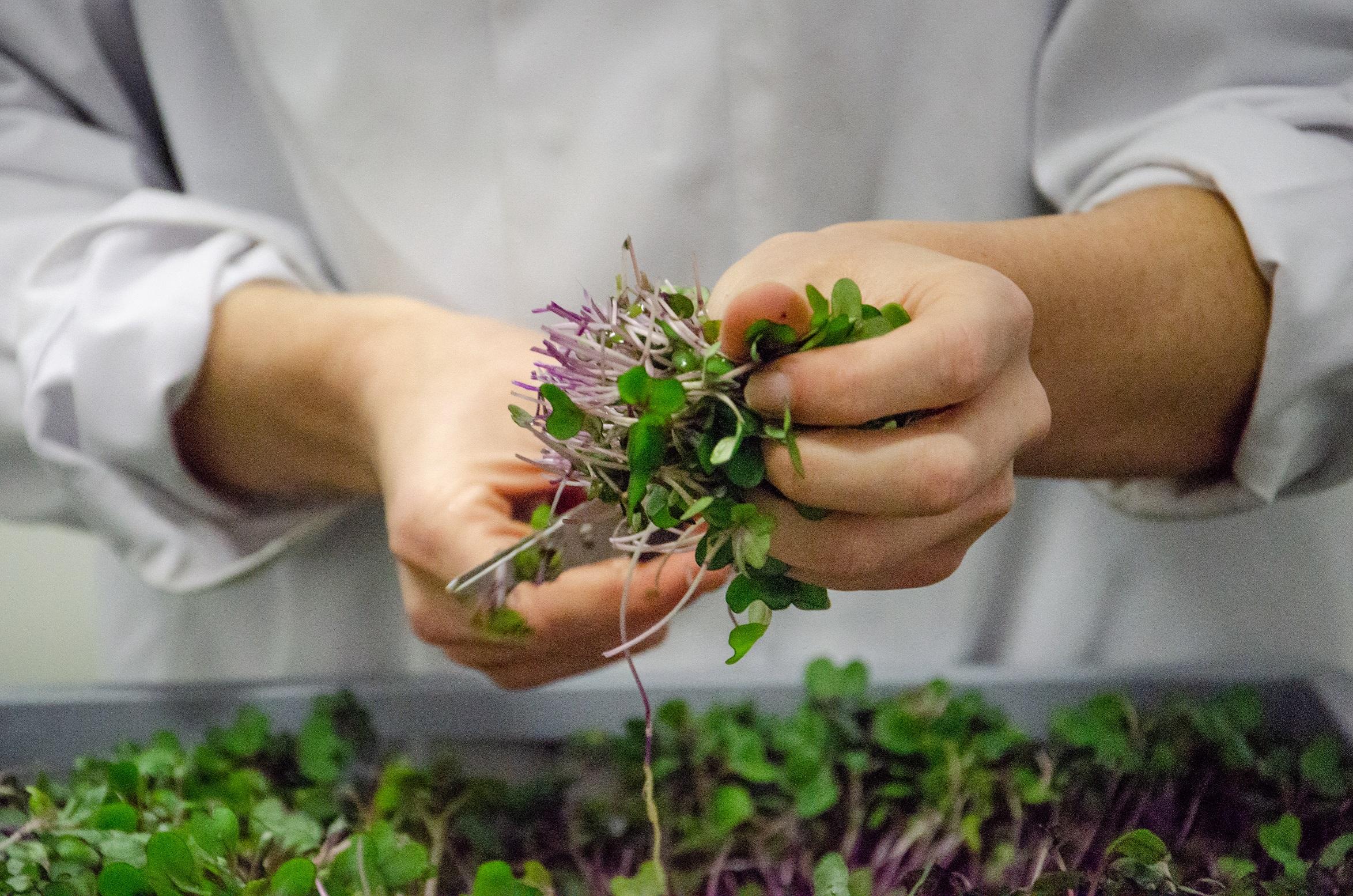Circadian rhythms: how do plants keep time? -