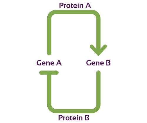 Protein+A.jpg