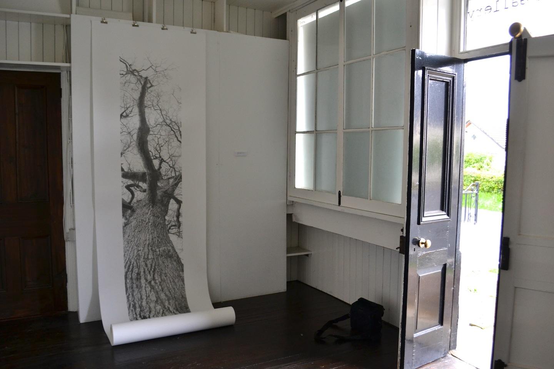 Vertical Panorama: Oak Tree