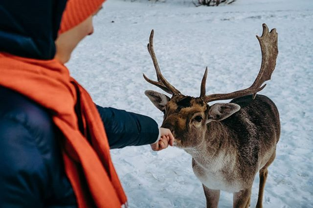 We made new friends, check out our video in the description to see why photographers live Russian winter! You won't be disappointed by the drone shots ! . . #Russia #russianwinter #snow #justgoshoot#photooftheday #travelgram#natgeaoadventure #belgianphotographer #artofvisuals #lensbible #natgeoru #ohdeer #deer #instaanimals #exploretocreate#exploreourearth #keepitwild #theimaged#beautifuldestinations #roamtheplanet#natgeoyourshot  #discoverearth #instasky #visualambassadors @kudago @themoscowtimes @i_love_msk