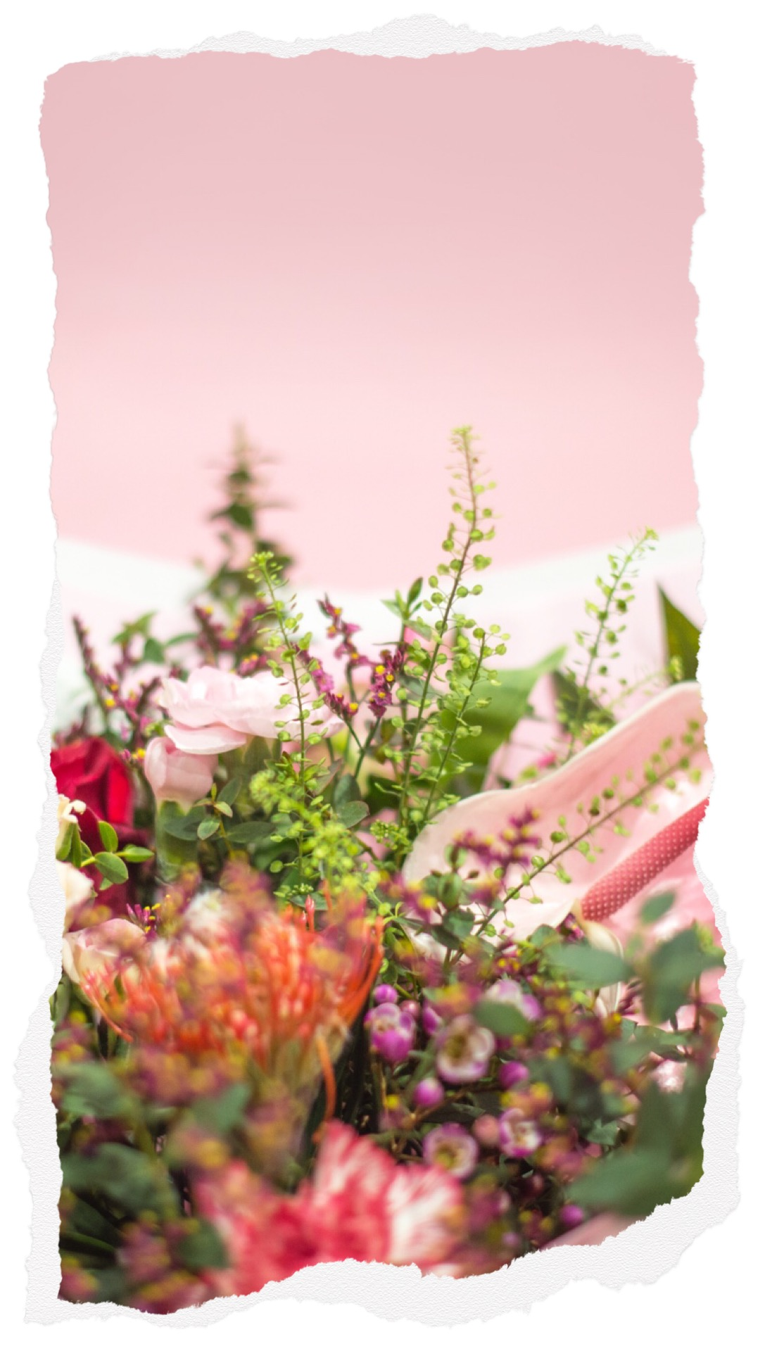 Bouquet St Valentin Ammi Biarritz