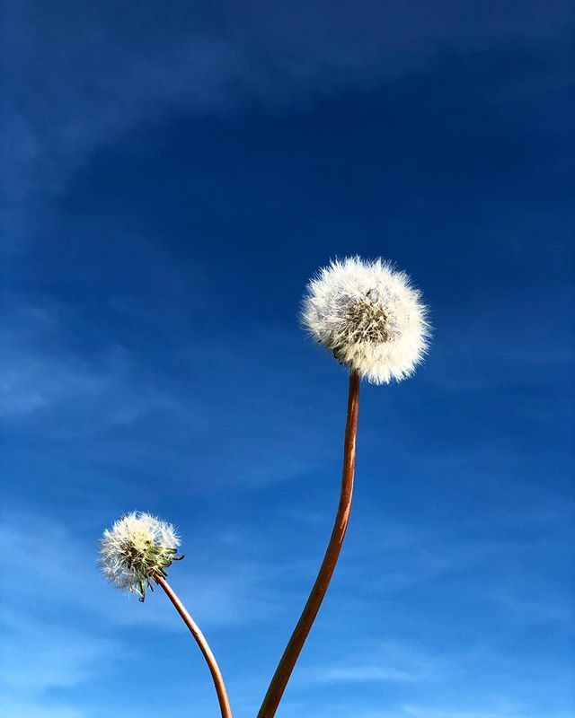 • 16h48, bleu ciel. #ammifleurs