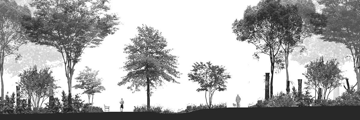 trail design, forest management, design for active aging