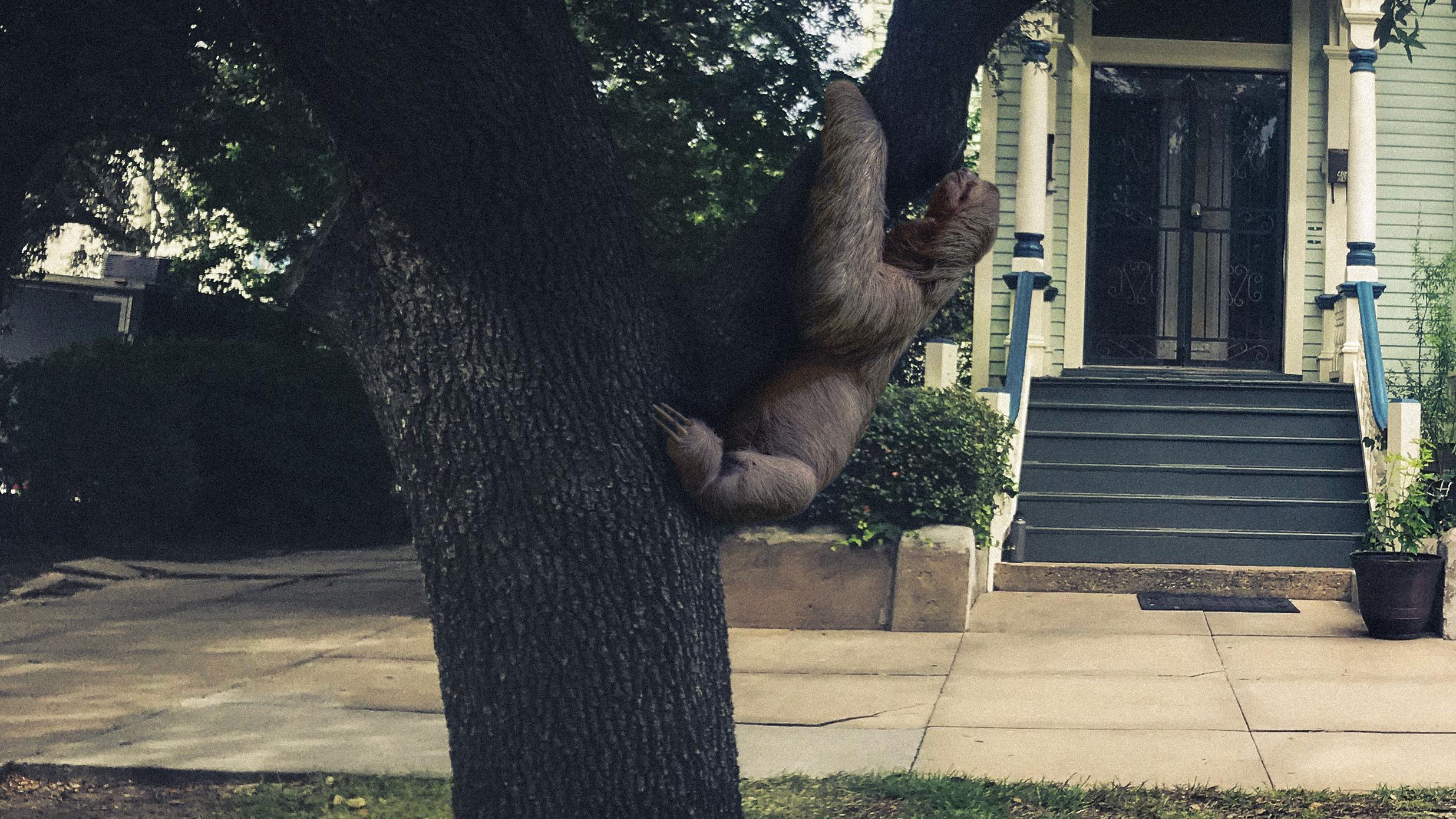 sloth_FINAL.jpg