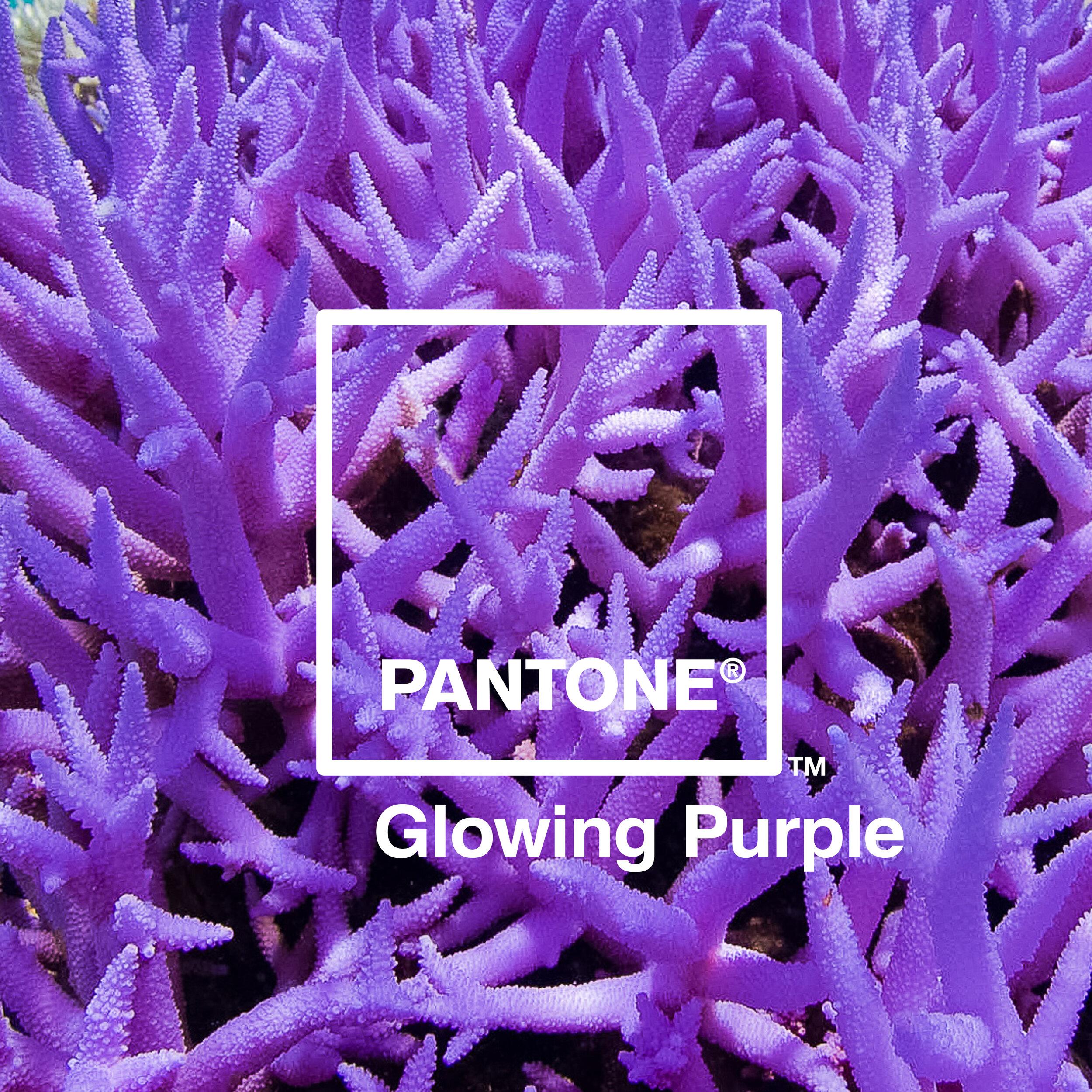 05 Glowing Purple.jpg