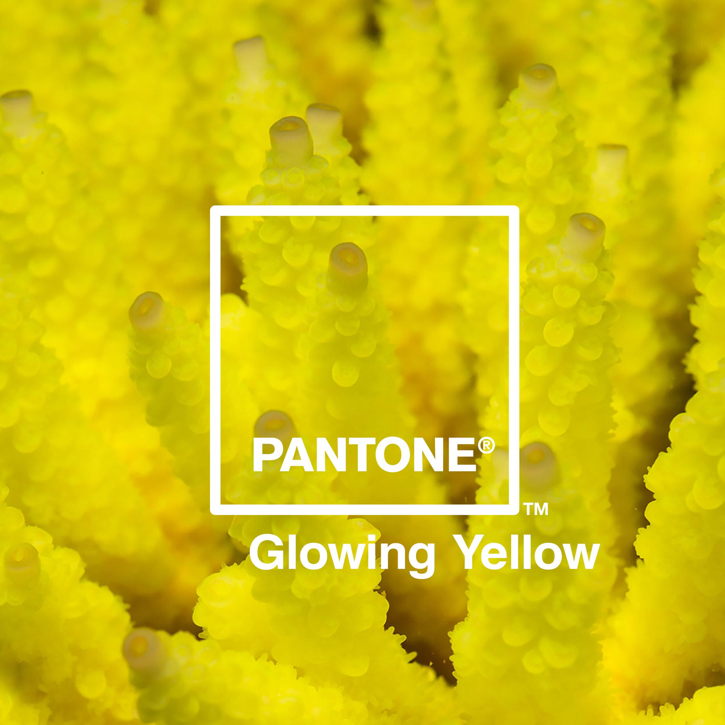 05 Glowing Yellow.jpg