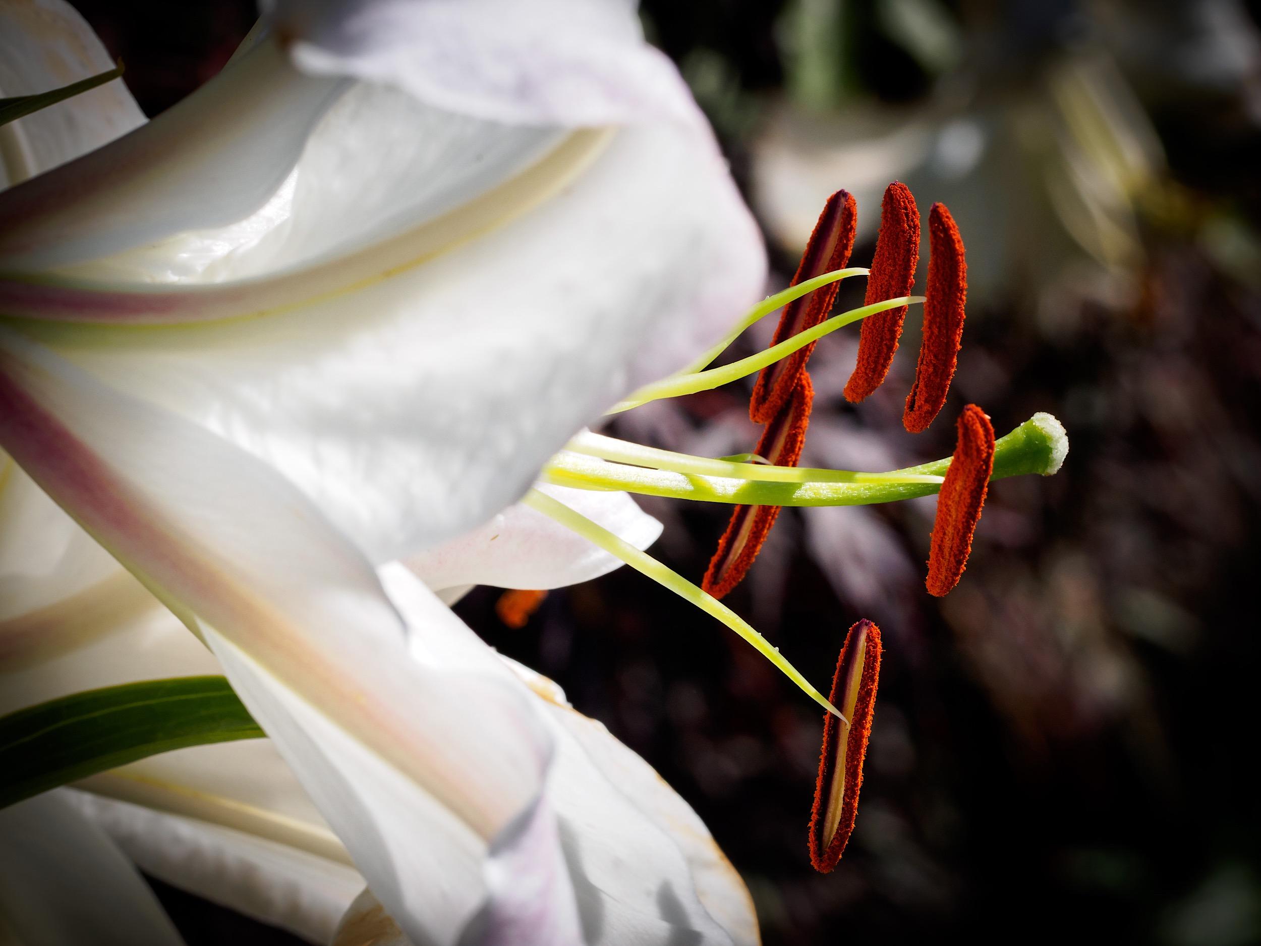 Carl Lum macro flower.JPG