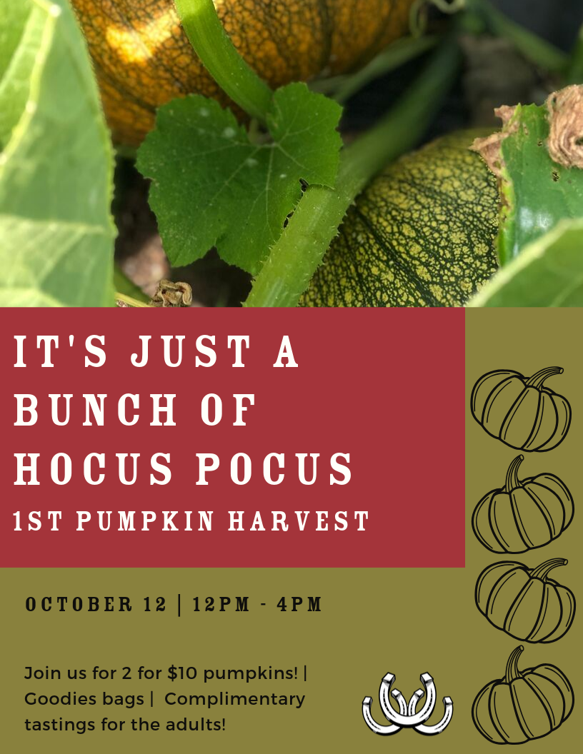 Pumpkin Patch Event 1.png