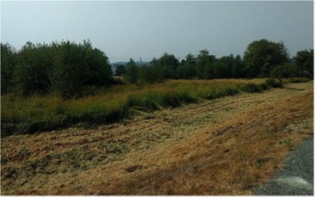 Wetland Restoration Site Before - Photo by Dave Preikshot