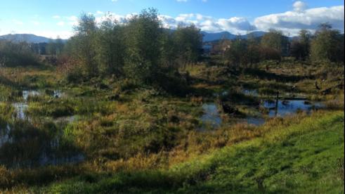 Wetland Restoration Site One Year After - Photo by Dave Preikshot