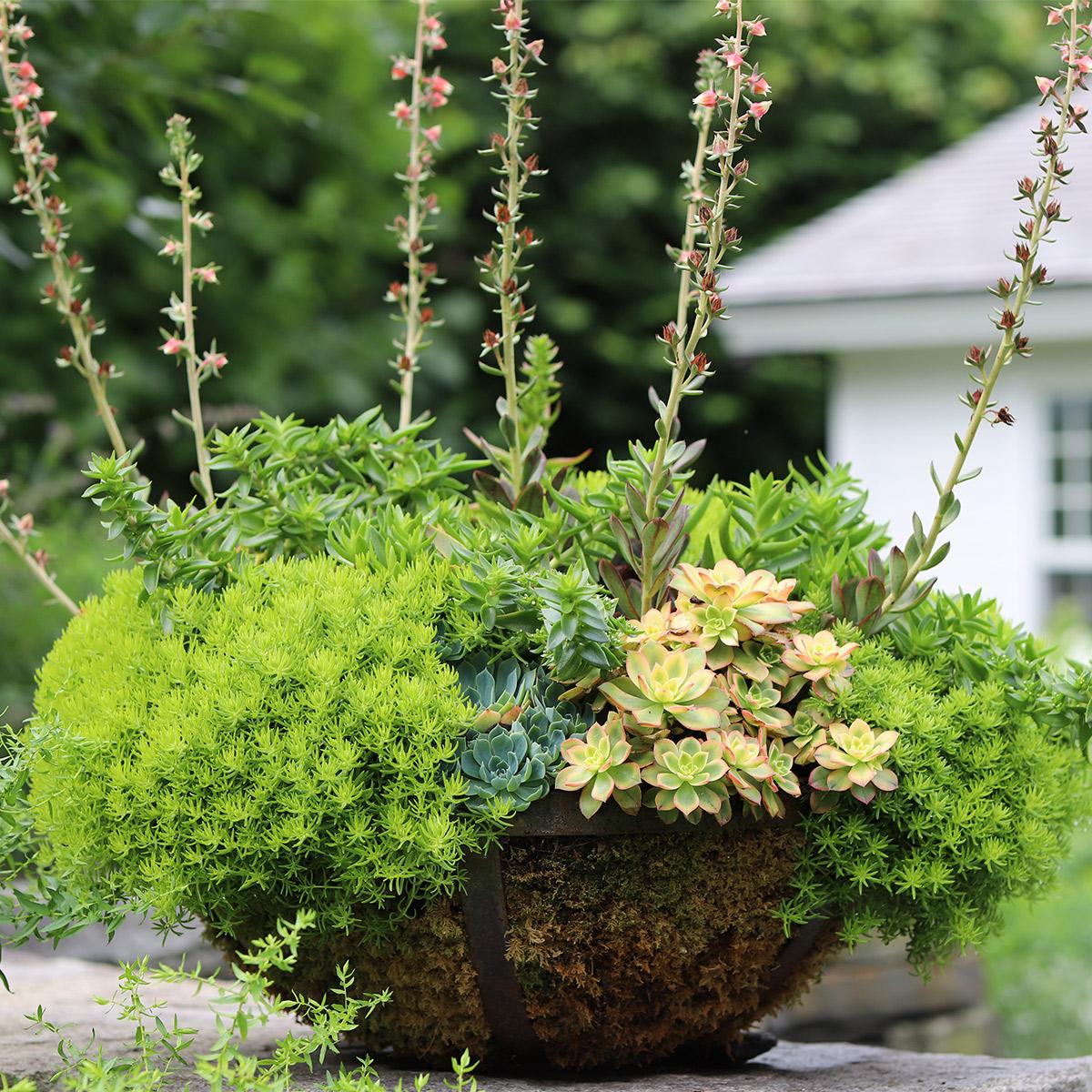 summer_planter.jpg