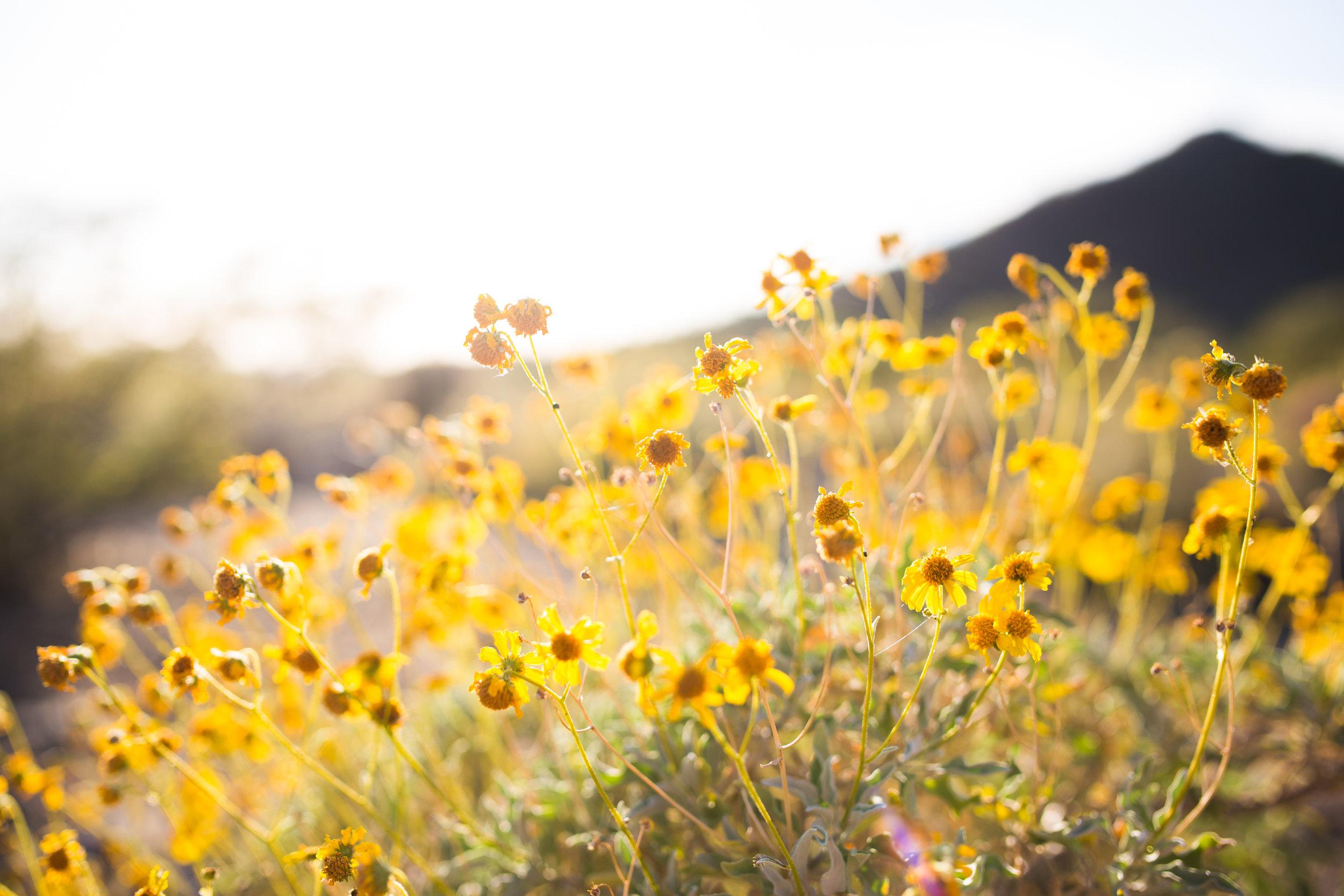 hope super bloom california