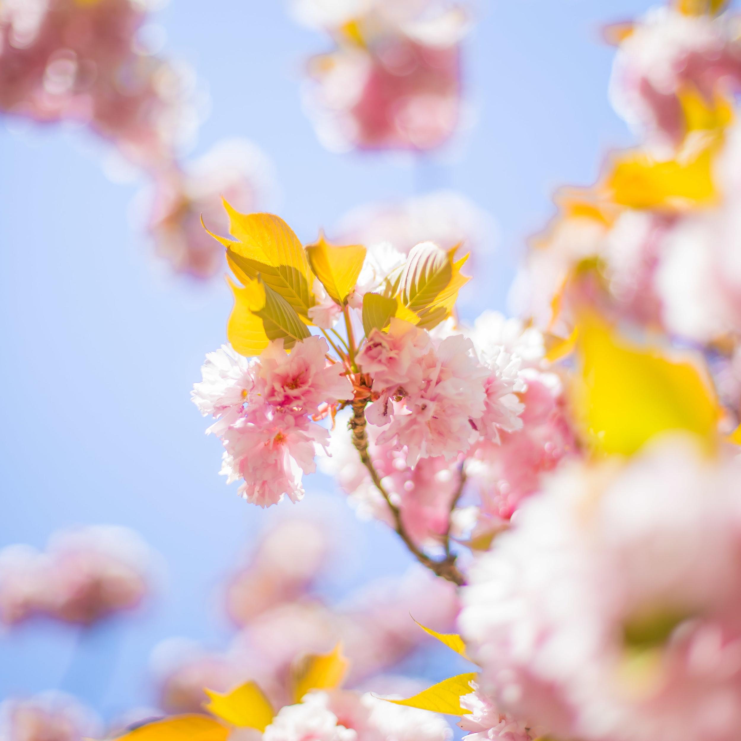 What is Spring Awakening in you darling?