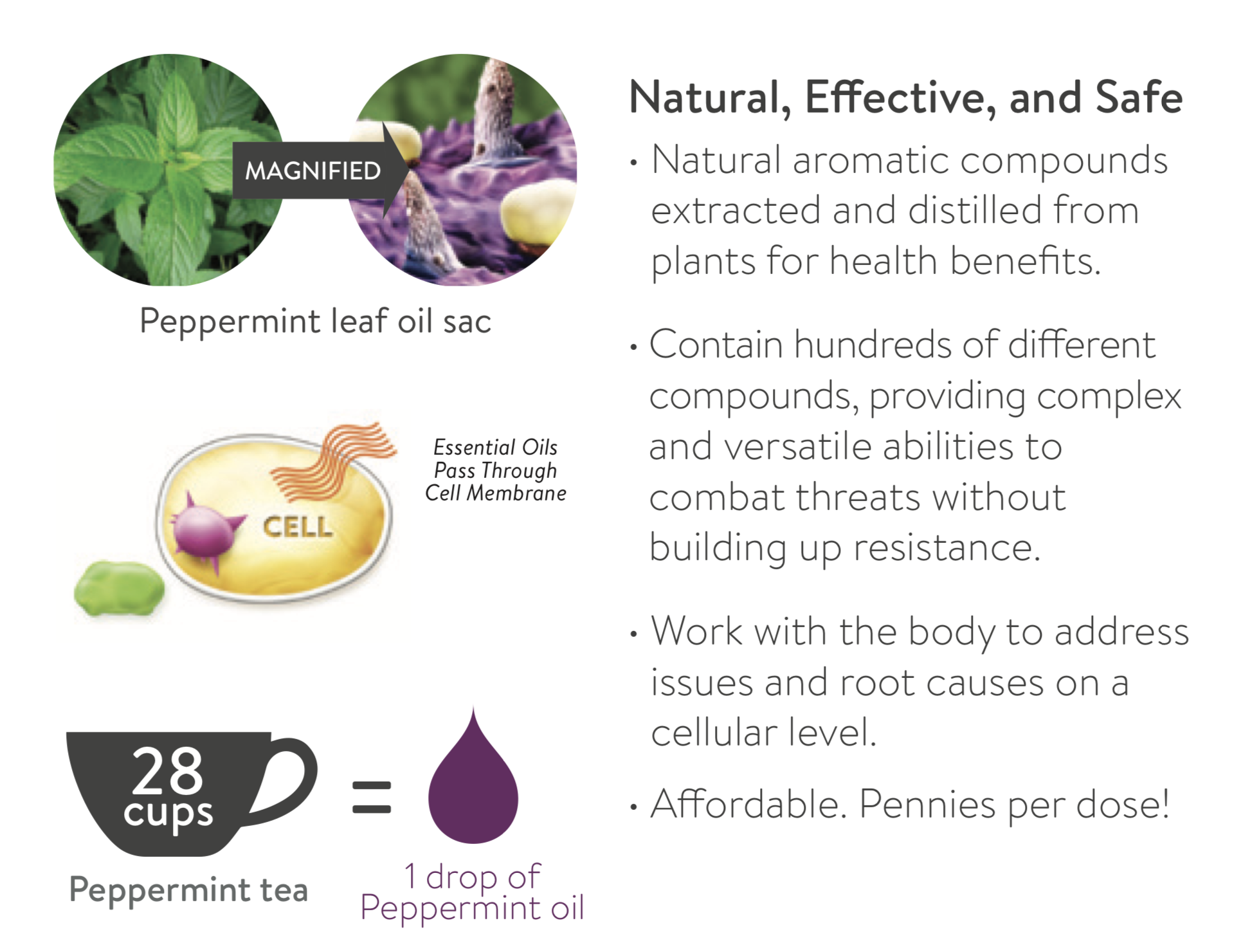 Essential oils are extracted from different parts of the plant and are 50 to 70 times more powerful than herbs.