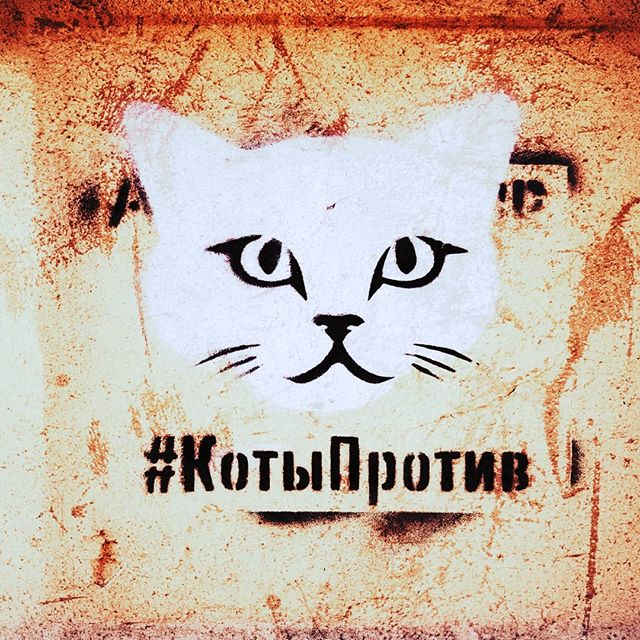 Can't argue with #cats #catsofinstagram #topspb #spb #котыпротив