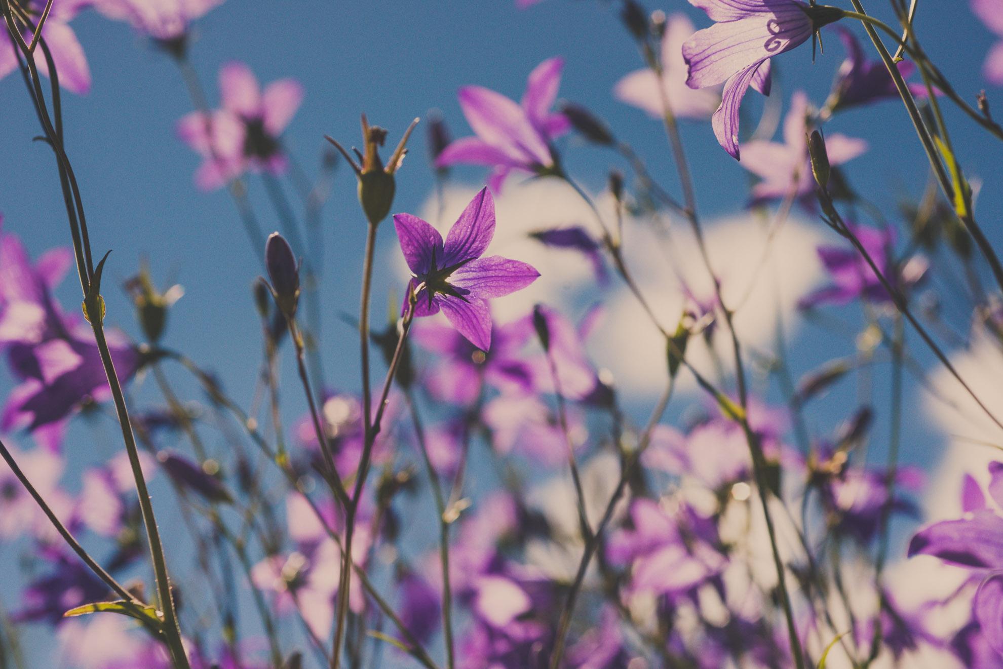 Naturfotografie-3.jpg