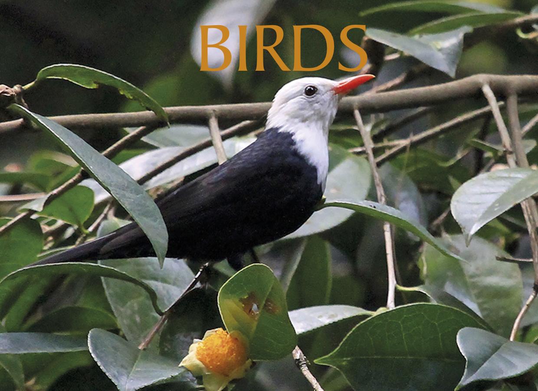 BIRDS NEW 2.jpg