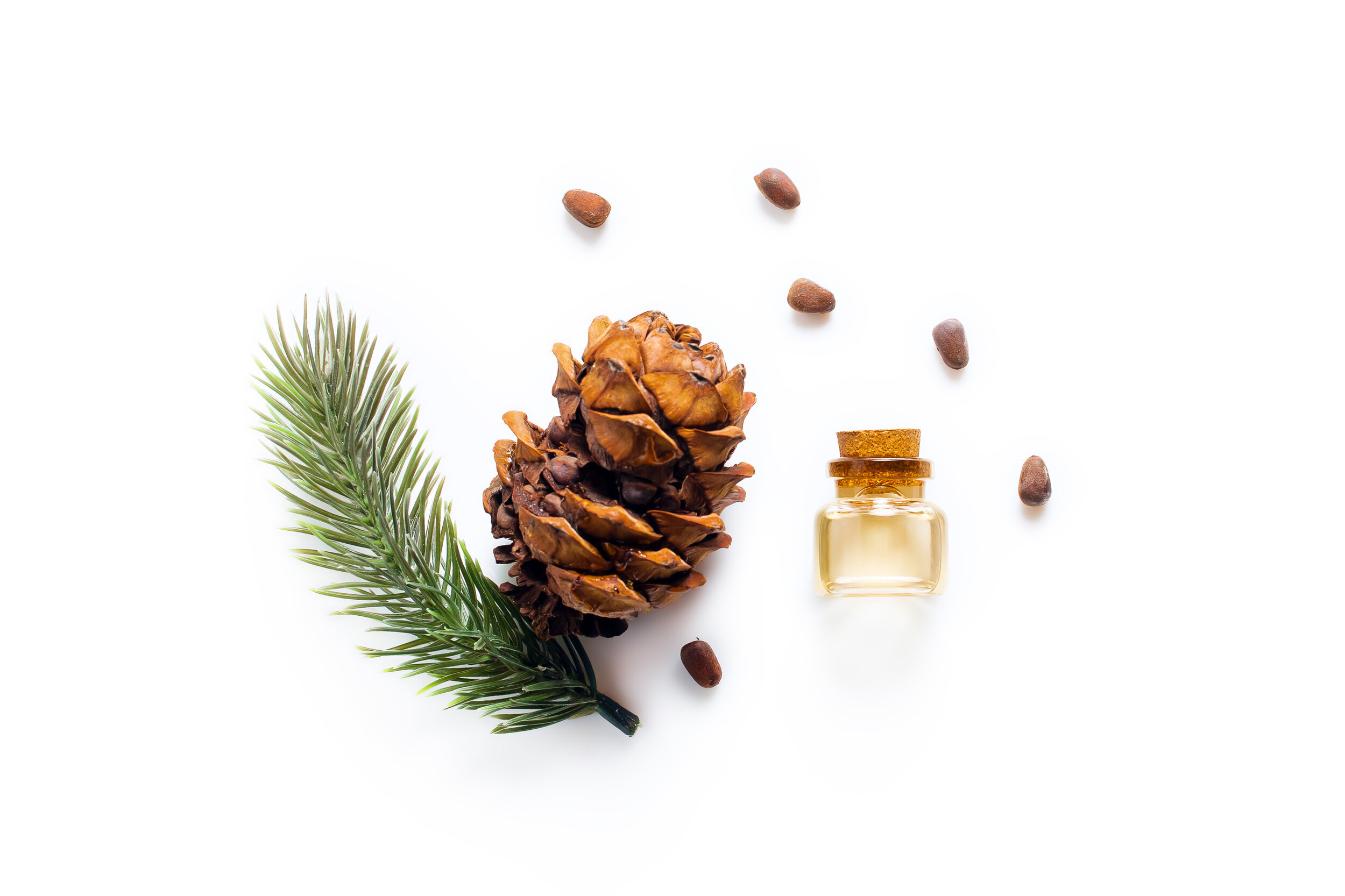 Cedar oil Bottles with pine oil and pine nuts, isolated on a white background