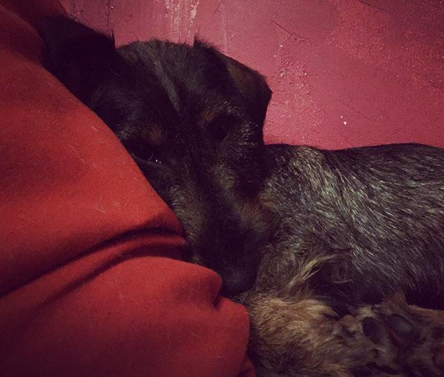 Öitä! T. Pilli #väsynytpilli