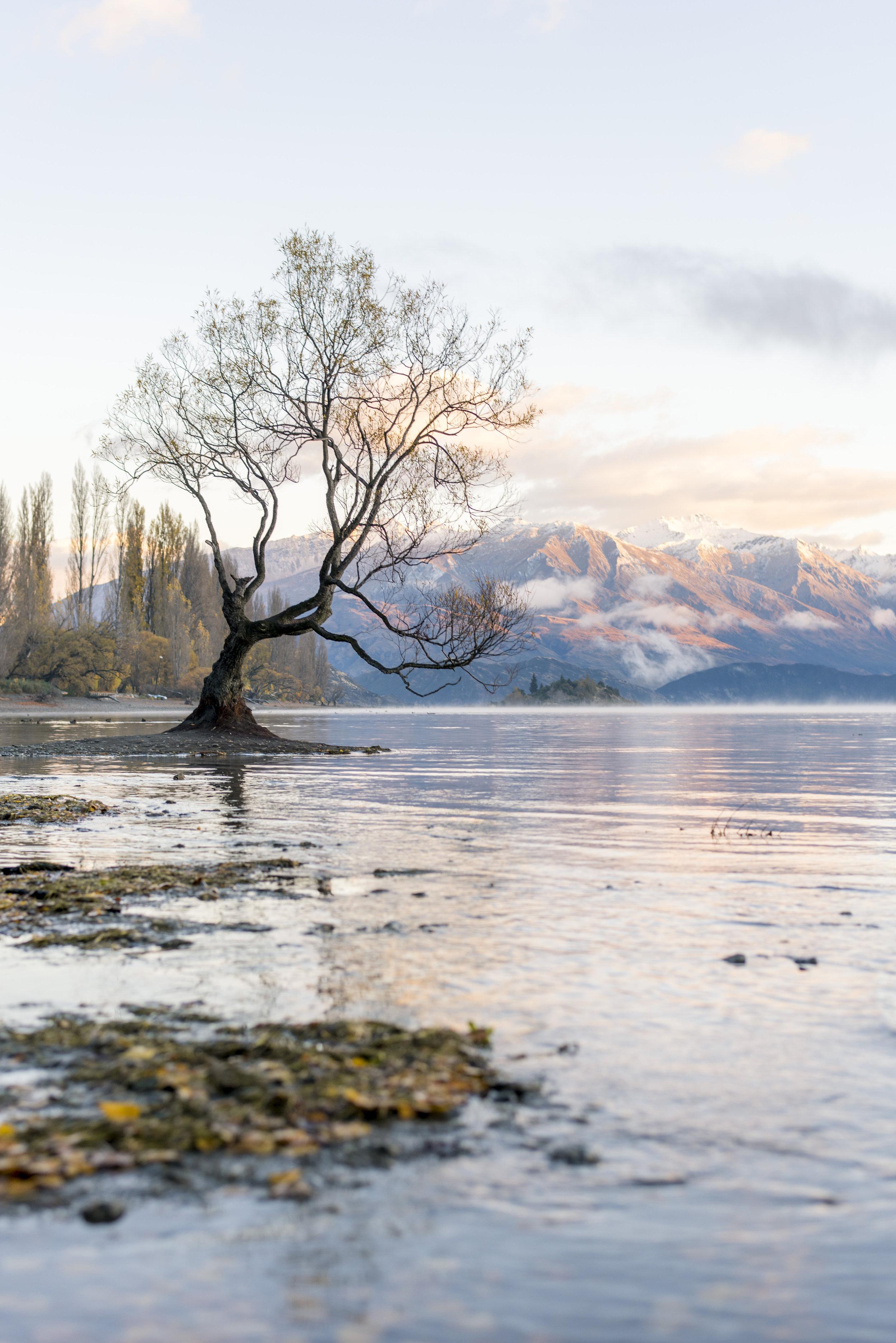 NZ11.jpg