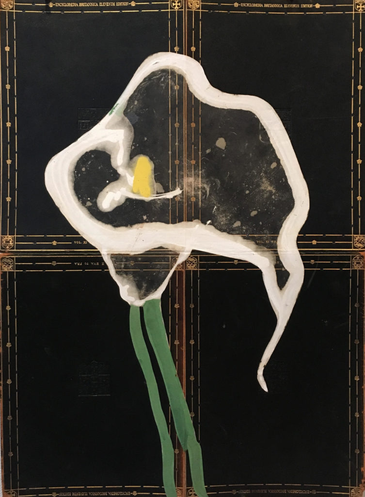 Robert Kushner, Calla Lily, 2018 They grew behind Aunt Sylvia's house, untended. These miraculous waxen blossoms appearing out of the deep green tropical foliage ever summer.