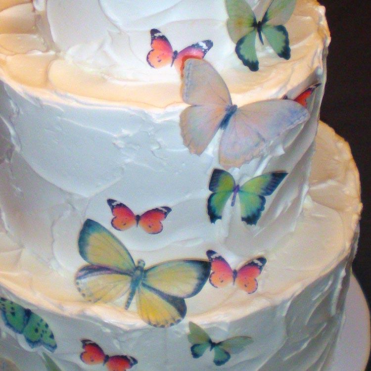 ingrid-fraser-cake-butterflies.jpg
