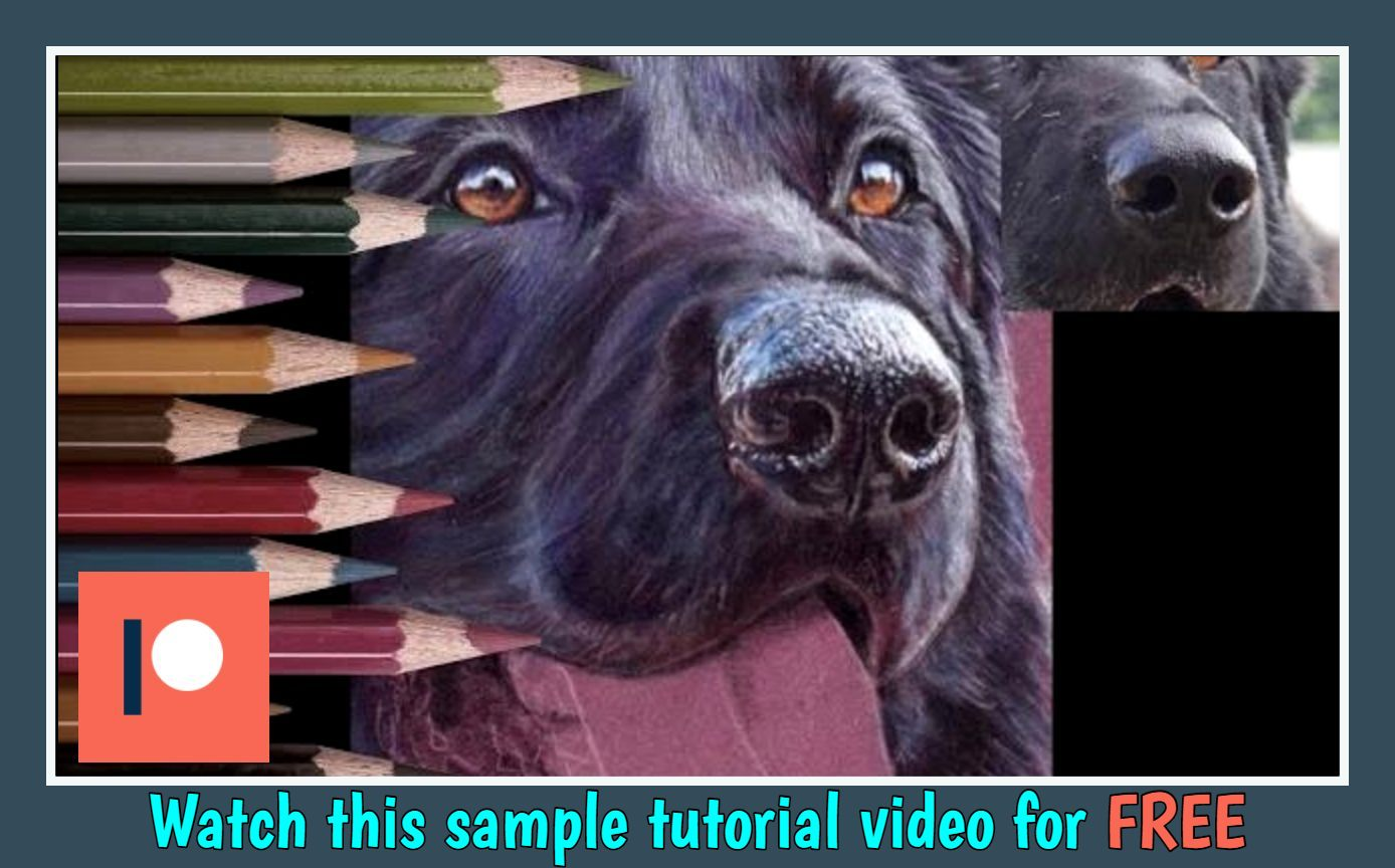 How to Draw a Dog's Nose using Coloured Pencils.jpg