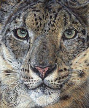 Snow+Leopard.jpg