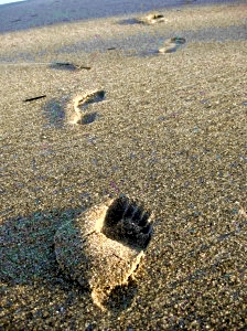Read the book to find out why NOT to start your barefoot running career on the beach…