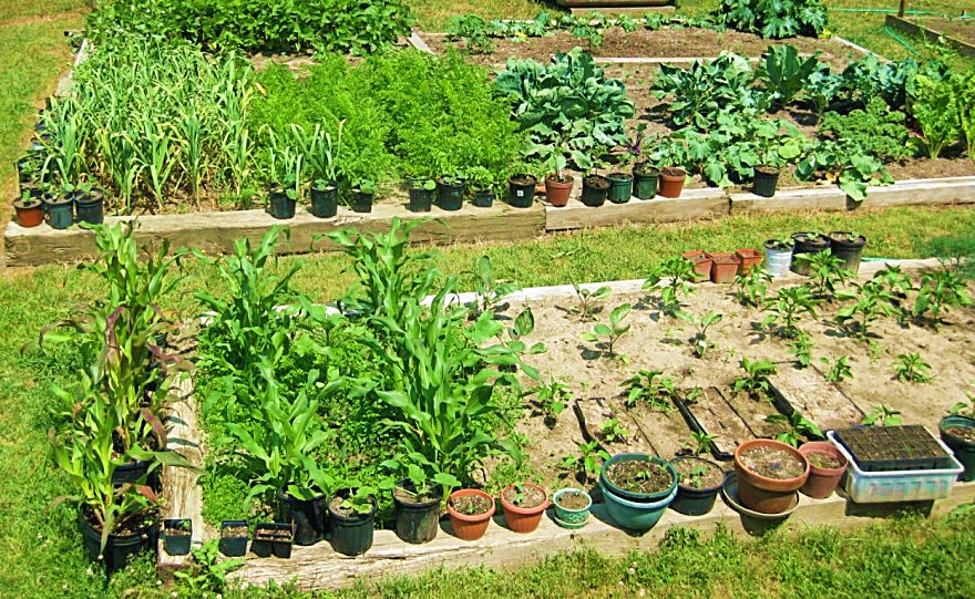 My friend's beautiful vegetable garden. Talk about how and what to eat!
