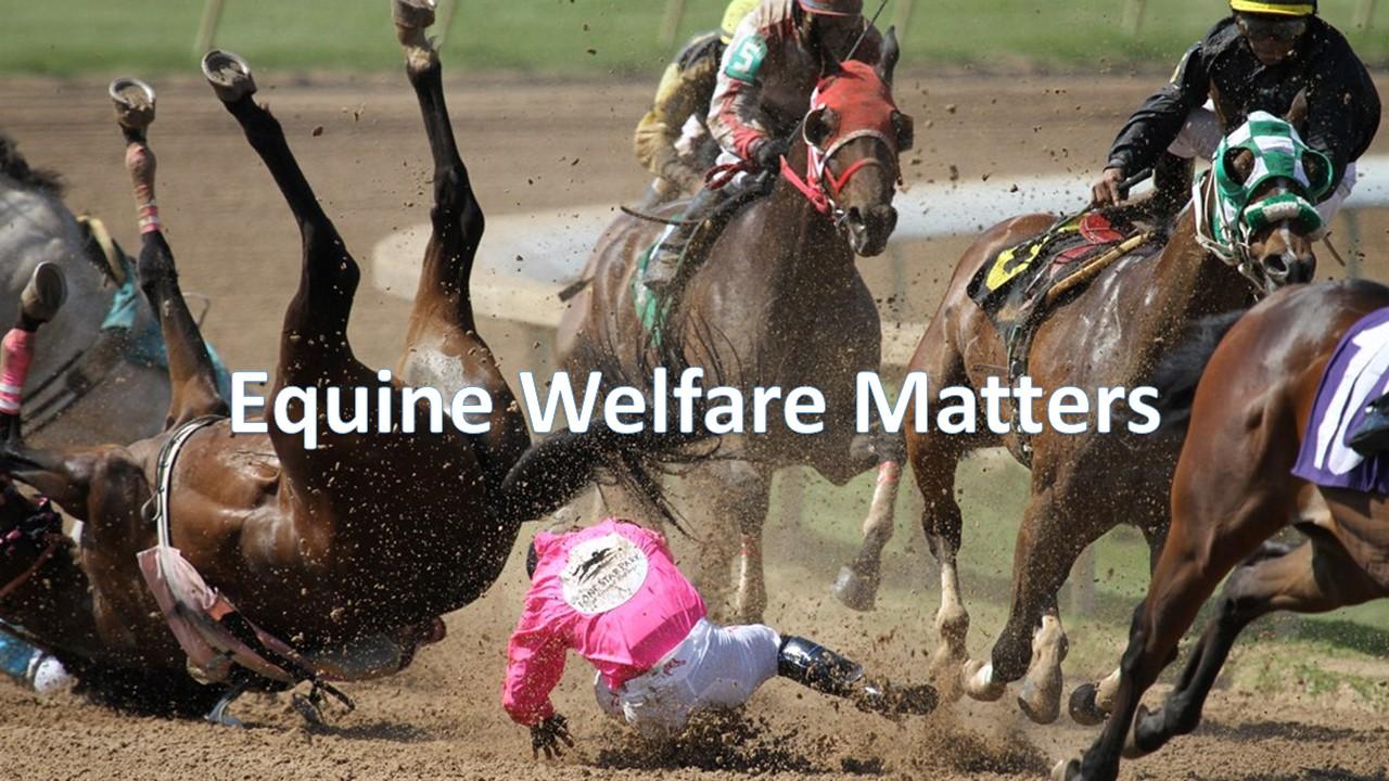 Equine Welfare Matters.jpg