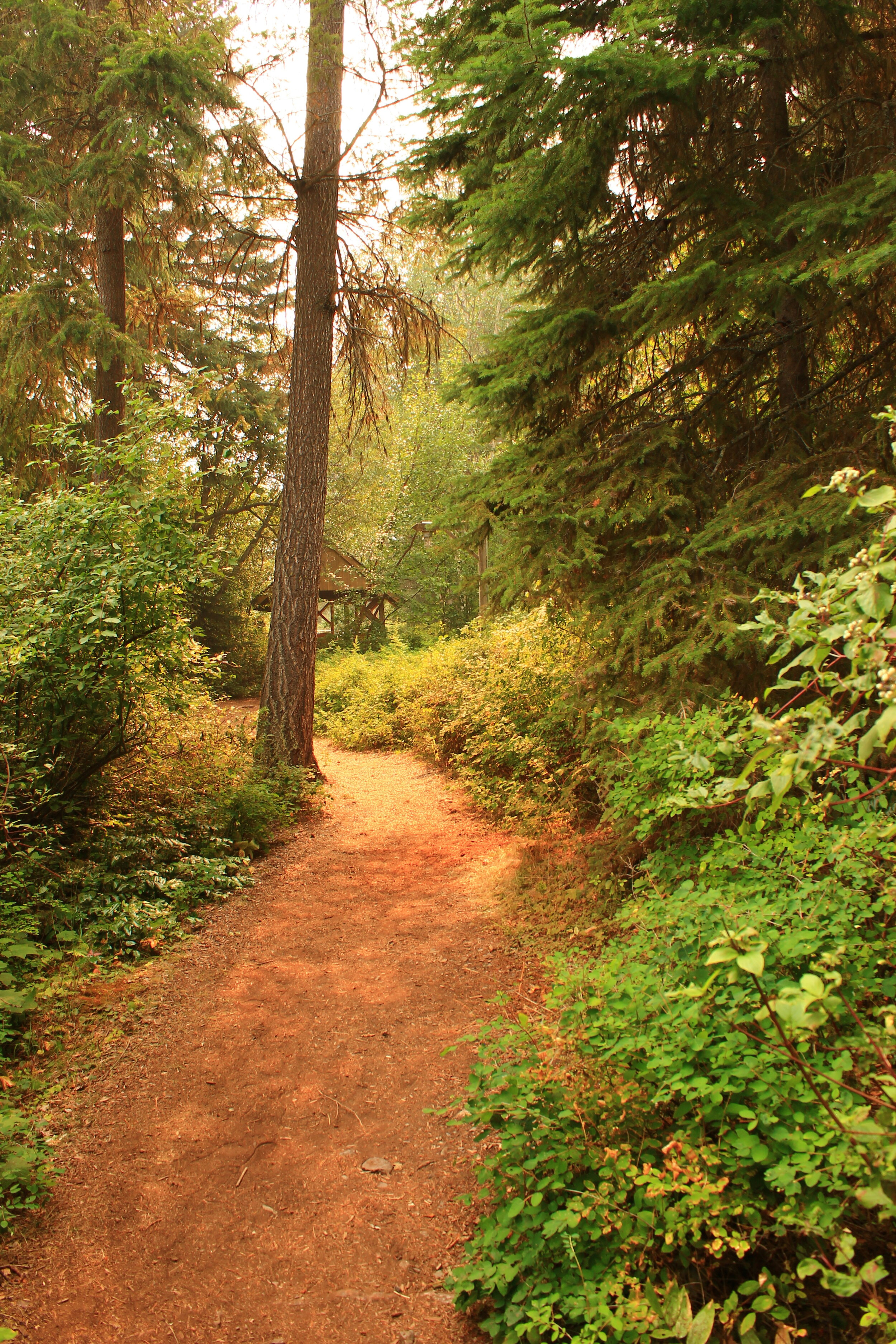 Trail from Waterfront