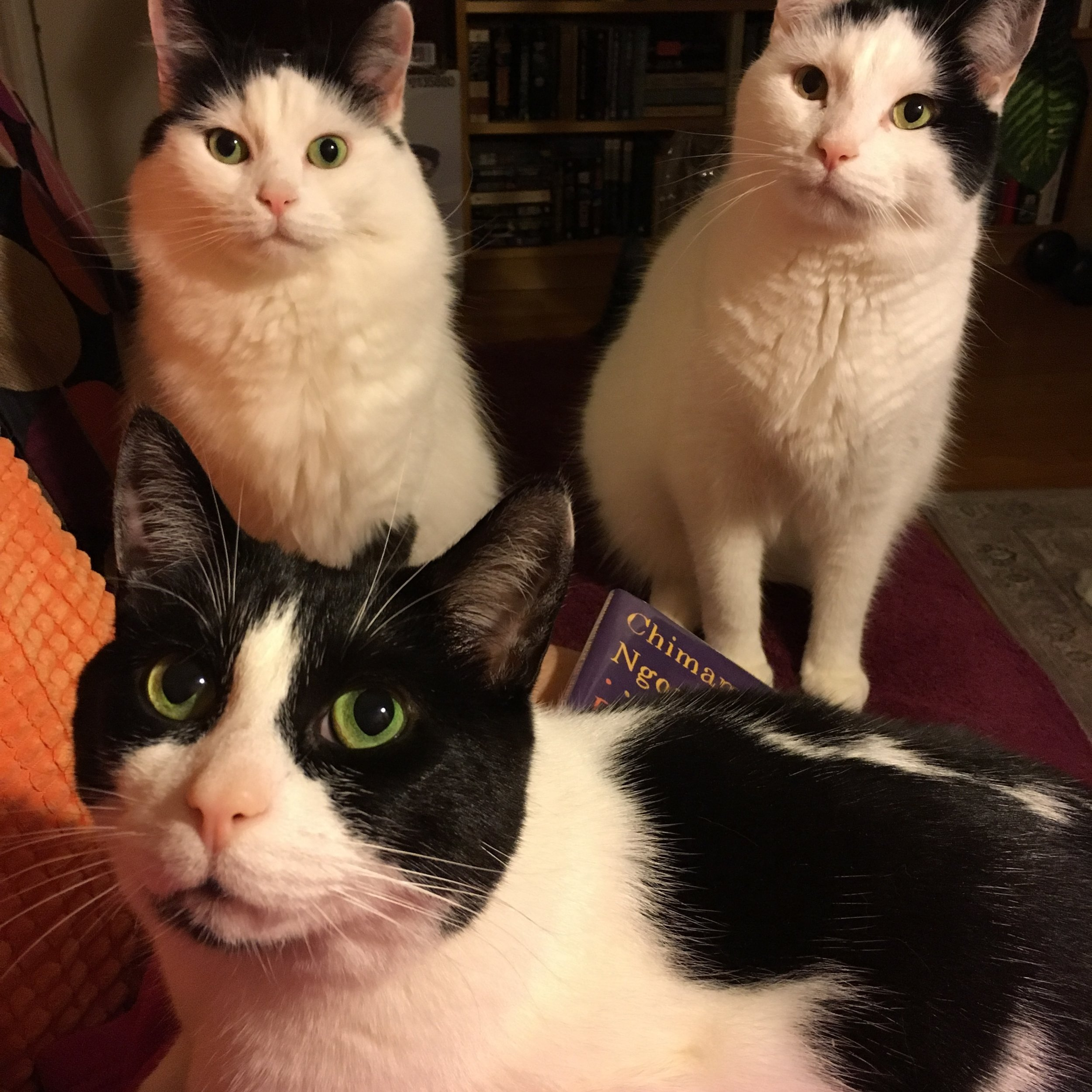 Happy New Year! - From all of us here - Ella, Gary & Hissy, (Frankie was hiding).