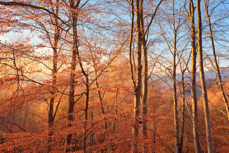 Rodopi_fall_trees_mediumres.jpg