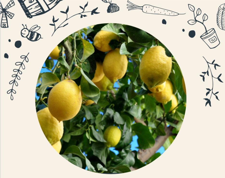 HOW TO GROW CITRUS