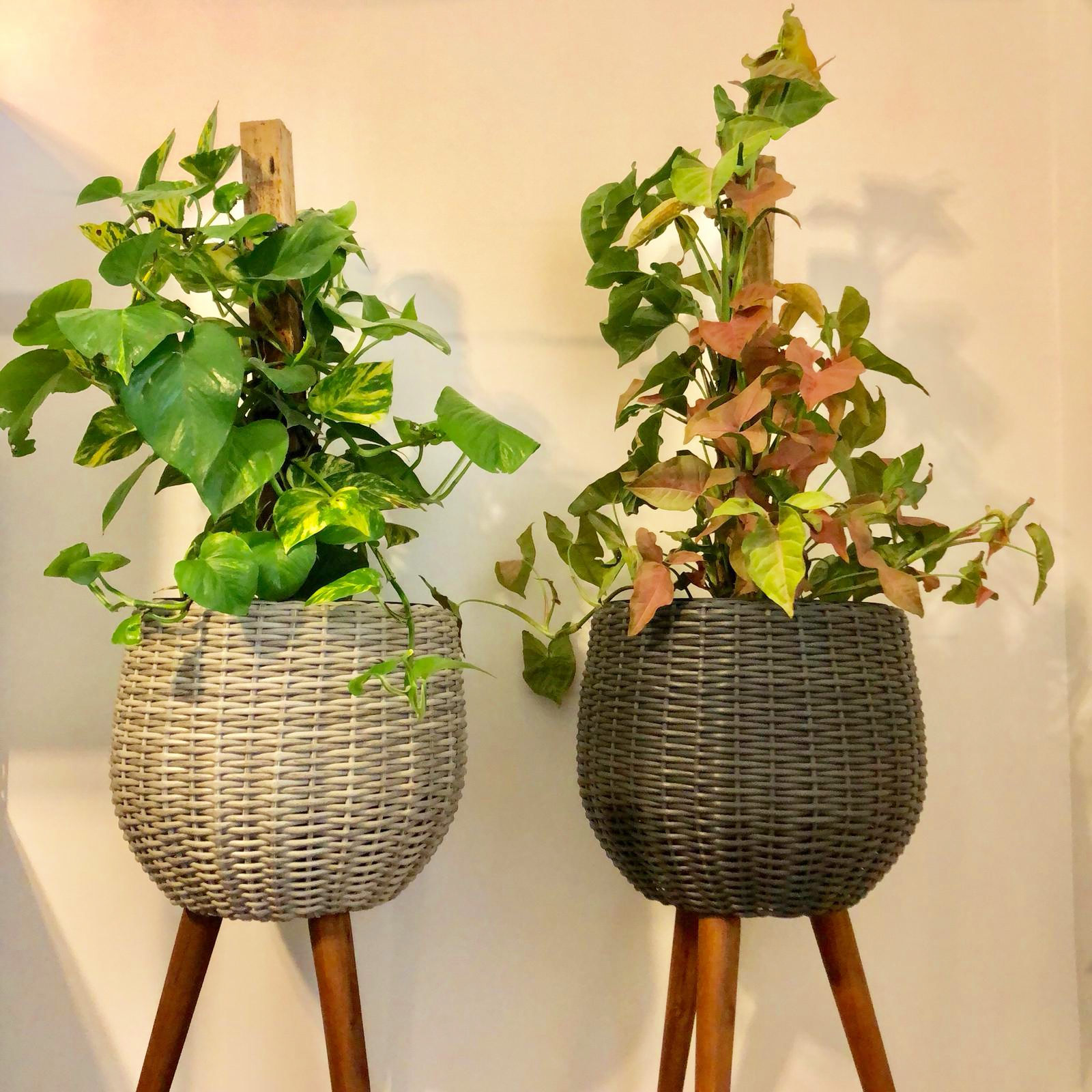 Arlo Plant Stands Two Styles Two Colours Heyne S Garden Centre
