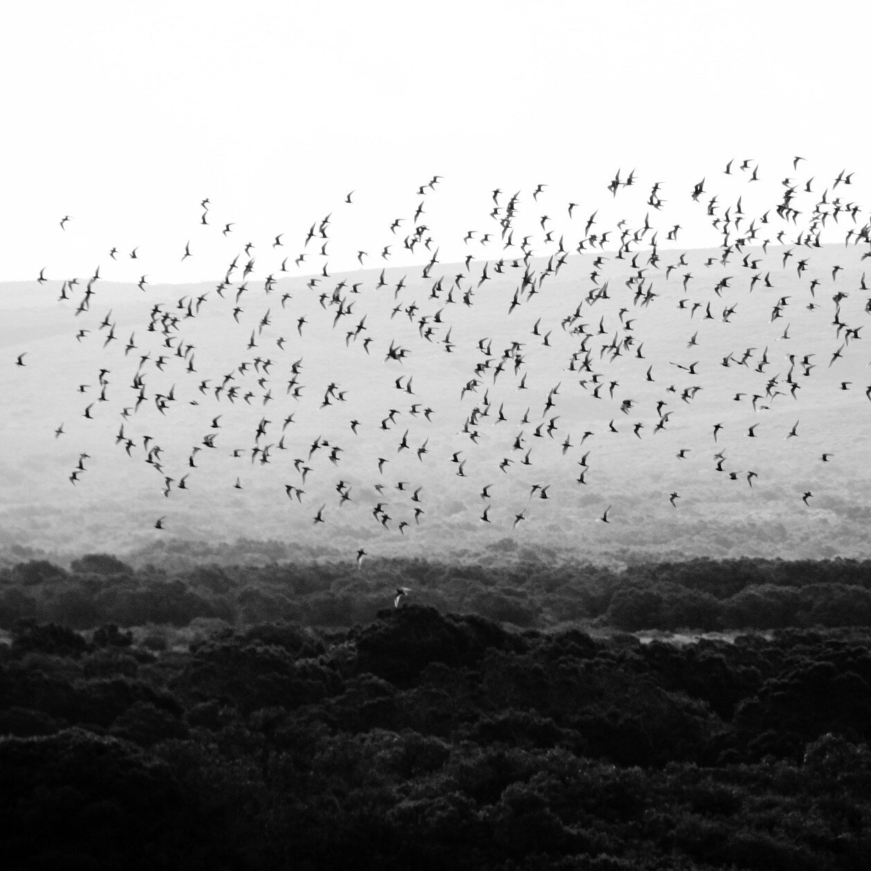 bird-290744_1920.jpg