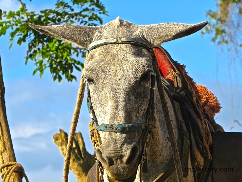 Mule Lost City