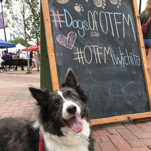 "It's Bella's favorite day of the week - Farmers' Market Day! It's Dog Day at @otfmwichita , so Bella wanted to tell you about a few of her favorite booths: -  @happytailspetbakery has the best doggy treats, and the best ice cube in town in case you get thirsty! 🐶 -  @alegriafairtradeadventures has the prettiest Fair Trade goods around! Mom is always stopping to hug @katypenner and get a new Indian dish towel! -  @blacklabelcandleco has the BEST smelling candles that help our house not smell like Boder Collies, teenage boys, or car parts! -  Today Mom got her usual coconut limeade, a 50 cent Barbara Kingsolver book at the @wichitalibrary table, found rustic French bread and goat cheese from @eldersliefarm to pair with the ripe peaches at home, and brought home warm tamales and tortillas for the family. Pretty good morning, if I do say so myself! Woof!"" 🐾 ❤️🌎 -  #farmersmarket #oldtown #iloveict #bordercolliesofinstagram #fairtrade #handmade #wichitalife #nationaldogday #buylocal #buyict #woofstagram #woof"