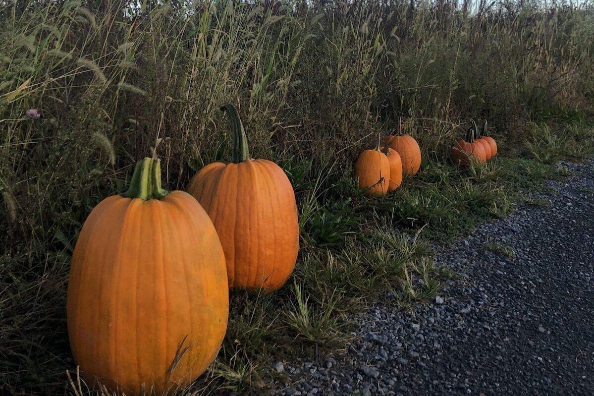 在纽约州的红钩,在我们的家庭经营的农场中挑选自己的南瓜。188金宝慱bet